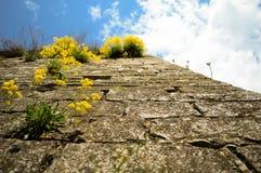 La parete della roccia e un giallo fiorisce Fotografie Stock Libere da Diritti