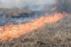 La parete di fuoco brucia l'erba asciutta immagini stock