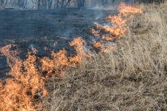 La parete di fuoco brucia l'erba asciutta immagine stock libera da diritti