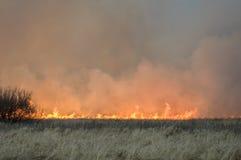 La parete di fuoco brucia l'erba asciutta Immagine Stock