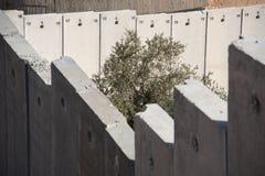 La parete di separazione israeliana divide la terra palestinese Fotografia Stock
