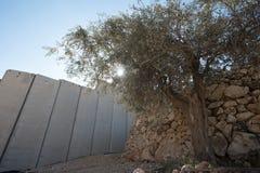 La parete di separazione israeliana divide la terra palestinese Fotografia Stock Libera da Diritti