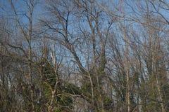 La parte del bosque con verde sale de árboles Fotografía de archivo