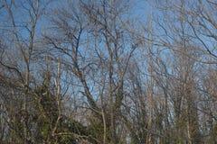 La parte del bosque con verde sale de árboles y del cielo azul Imagen de archivo libre de regalías