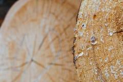 La parte del primo piano del pino ha visto per tagliare con le palle della resina nella priorità alta e nella sega rotonda taglia Fotografia Stock
