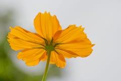 La parte inferior de la flor anaranjada Foto de archivo