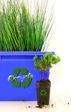 La parte interna alta dell'erba ricicla lo scomparto Fotografia Stock Libera da Diritti