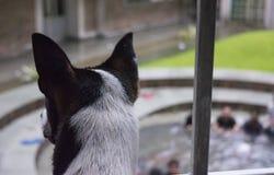 La parte posterior de la cabeza de un perro que es divertido en la gente que hace un jaléo en la piscina abajo Fotografía de archivo