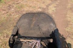 La parte posterior de la cabeza del ` s del elefante Imágenes de archivo libres de regalías