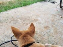 La parte posterior del perro en granja de los cerdos Fotografía de archivo libre de regalías