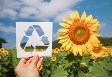 La participation de main réutilisent le symbole de papier fait à partir du papier au-dessus du tournesol classé Photographie stock