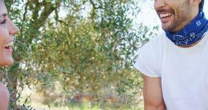 La participation de sourire de couples a moissonné des olives dans la ferme 4k clips vidéos