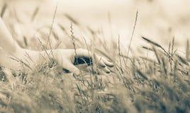 La participation femelle a remettent des transitoires d'herbe photographie stock libre de droits
