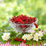 La pasa roja en un florero y un jazmín de cristal florece Fondo verde enmascarado Imagen de archivo