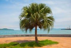 La passeggiata centrale con le palme dal mare Kota Kinabalu, Sabah, Malesia Fotografie Stock Libere da Diritti