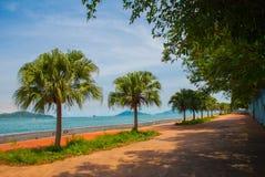 La passeggiata centrale con le palme dal mare Kota Kinabalu, Sabah, Malesia Fotografia Stock Libera da Diritti