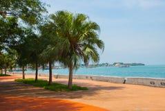 La passeggiata centrale con le palme dal mare Kota Kinabalu, Sabah, Malesia Fotografia Stock