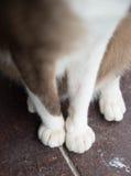 La pata del gato Fotos de archivo libres de regalías
