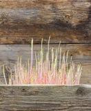 La patata brotada con los lanzamientos del rosa entre el granero de madera viejo sube imagen de archivo