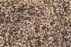La patata organica si è riunita all'azienda agricola ecologica, fondo Fotografia Stock