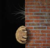 La patte et les favoris du chat derrière le mur photos stock