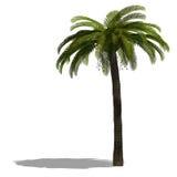 la paume 3d rendent l'arbre illustration libre de droits