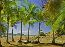 La paume a couvert la plage Photographie stock