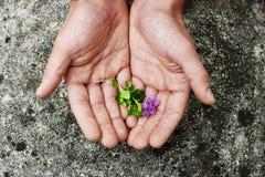 La paume des hommes avec une fleur Photos libres de droits