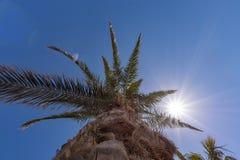 La paume a embrassé par le soleil photographie stock