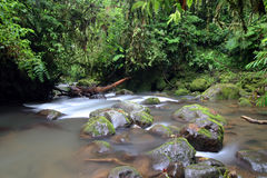 La Paz gardens. Long exposure shot of beautiful stream water flowing down in rain forest. La Paz gardens. Costa Rica Stock Photography