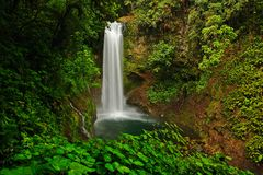 La Paz Waterfall gardens, with green tropical forest, Central Valley, Costa RIca Royalty Free Stock Photography