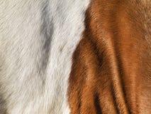 La peau de cheval Photographie stock libre de droits