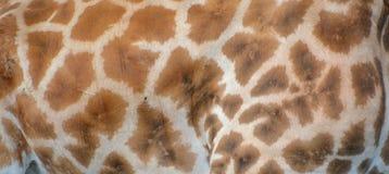 La peau de girafe Image stock