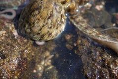 La peau de poulpe scintille à la lumière du soleil Photographie stock libre de droits