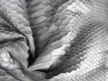 La peau mesurée noire de python, noircissent pour la texture photographie stock libre de droits