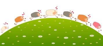 La pecora di amore persegue dopo altra Immagini Stock Libere da Diritti