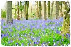 La peinture d'aquarelle de la jacinthe des bois fleurit dans les bois Image libre de droits