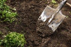 La pelle creuse la terre pour des jeunes plantes Image libre de droits