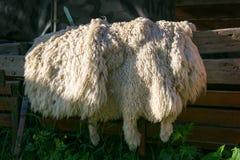 La pelle del ` s delle pecore si asciuga sul recinto fotografie stock libere da diritti