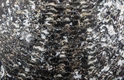 La pelle delle coperture Immagini Stock