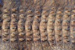 La pelle di grande coccodrillo Immagini Stock Libere da Diritti