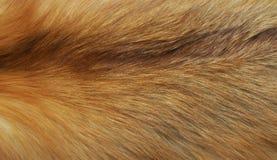 La pelliccia Immagini Stock