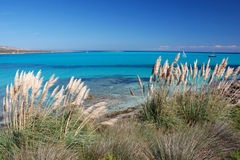 La Pelosa beach 9 Royalty Free Stock Images