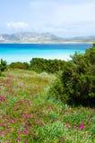 La Pelosa Stintino - costa bonita de sardinia no norte Imagem de Stock