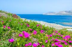 La Pelosa Stintino - costa bonita de sardinia no norte Foto de Stock Royalty Free