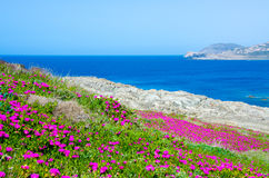 La Pelosa Stintino - costa bonita de sardinia no norte Fotos de Stock