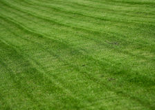 La pelouse Image libre de droits