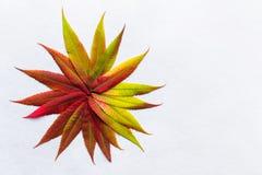 La pendiente coloreó las hojas arregladas como flor Imagen de archivo