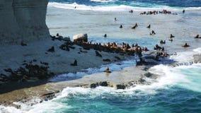 La penisola Valdes dell'Argentina dalle colonie di corvi della guarnizione di pelliccia stock footage