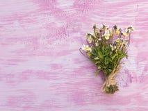 La pensée jaune sauvage fleurit le bouquet Image libre de droits